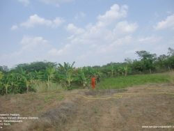 dusi-hanuman-8-04-2012-001
