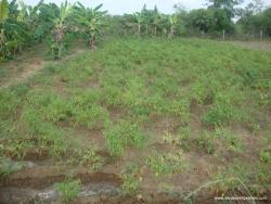 dusi-hanuman-8-04-2012-002