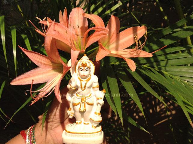 hanuma-sanjeevinipeetam-11