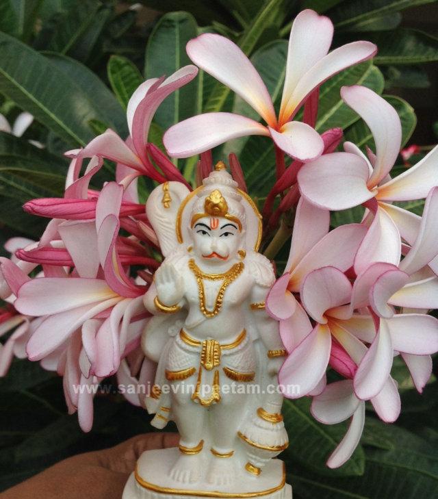 hanuma-sanjeevinipeetam-13