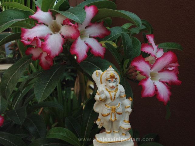 hanuma-sanjeevinipeetam-15