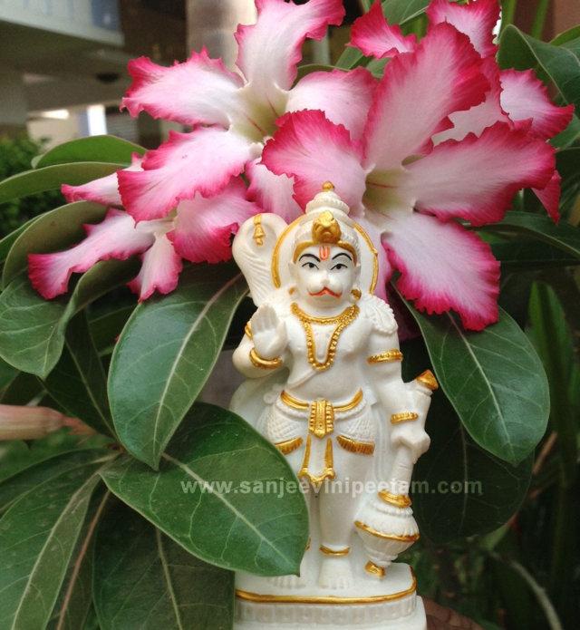 hanuma-sanjeevinipeetam-16