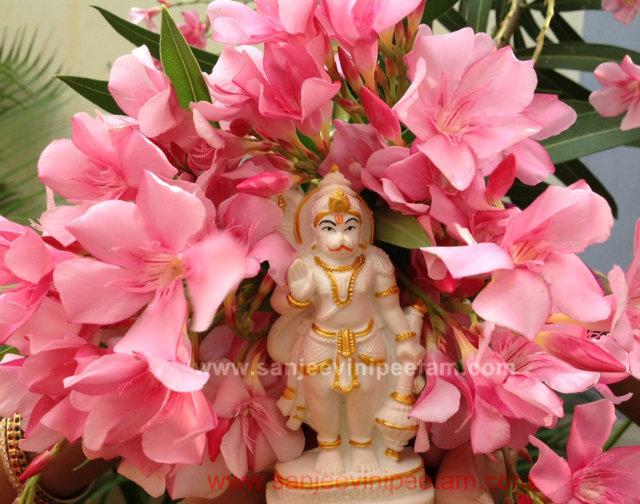 hanuma-sanjeevinipeetam-19