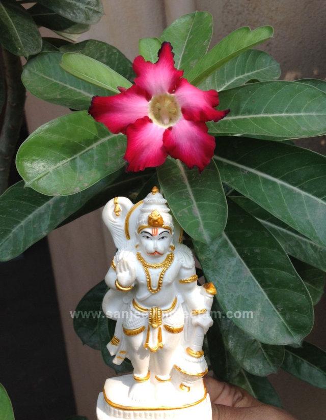hanuma-sanjeevinipeetam-2