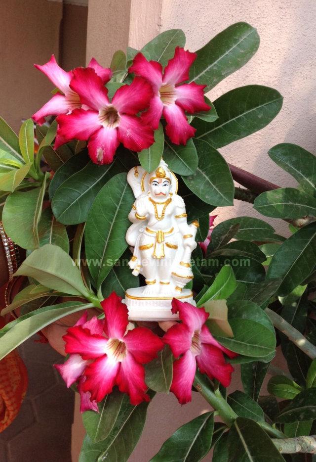 hanuma-sanjeevinipeetam-5