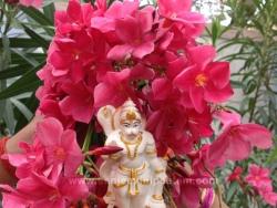 hanuma-sanjeevinipeetam-9