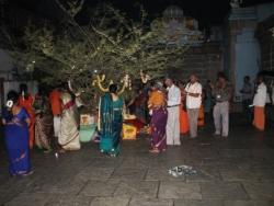 Koti somavaram 2014 (13)