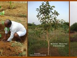 Mathaji garden (1)