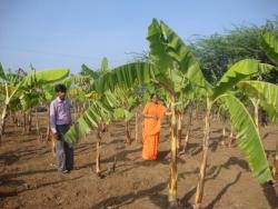 Mathaji garden (10)