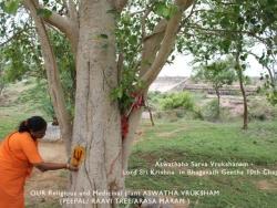 Mathaji garden (19)