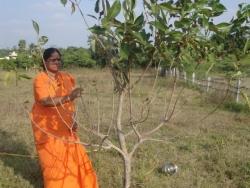 Mathaji garden (4)
