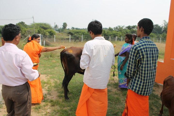Sankranthi 2015  (9)