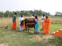 Sankranthi 2015  (10)