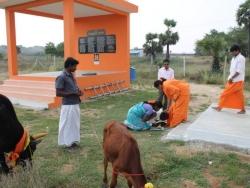 Sankranthi 2015  (12)